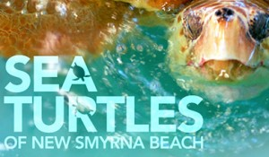 NSB Turtle Trackers Online