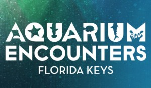 Florida Keys Aquarium Encounters